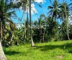 coconut tree land sale in anuradhapura