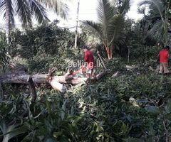 Cutting trees