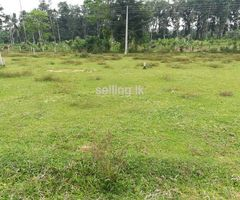 A land for selling immediately in Kottawa