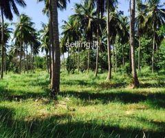 Eco friendly land for sale in wattala