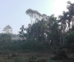 1.5 acre land for lease in Horana