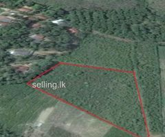 Land for sale in Aluthgama