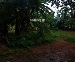 Minuwangoda land for sale