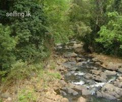 Land for sale near Sinharaja Rain Forest