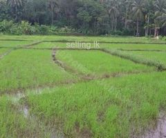 Paddy Field For Sale