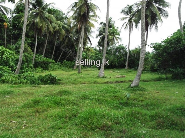 kurunegala tawn land for sale