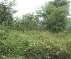 30 Perches land for sale in Kumbuka, Gonapola
