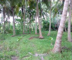 Land for sale anuradhapura