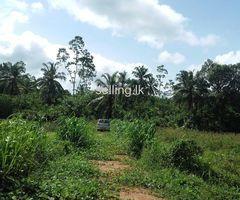 idama vikinimata miriswaththa benthota 6 kanuva. la opnd for sale in Miriswatta Galle