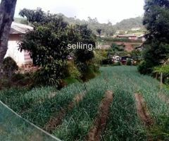 A property in Nuwaraeliya ..near Gregory Lake