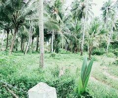 Land in Kuliyapitiya parata mohunala