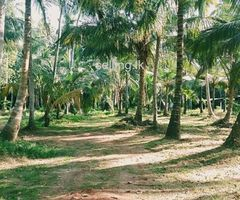 coconut land for sale in kuliyapitiya