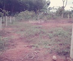 Land for Immediate Sale-Matale,Palapathwala.