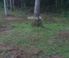 House + Land for Sale In Gamapaha Kidagammulla