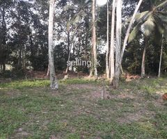 Land for sale Mawaramandiya