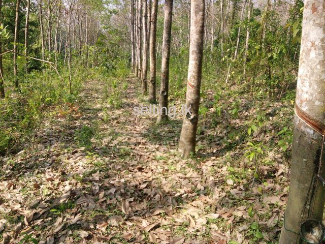 Rubber land for sale
