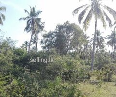 Cocanat land for sale in Hambantota