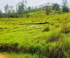 fantastic land in Bandarawela