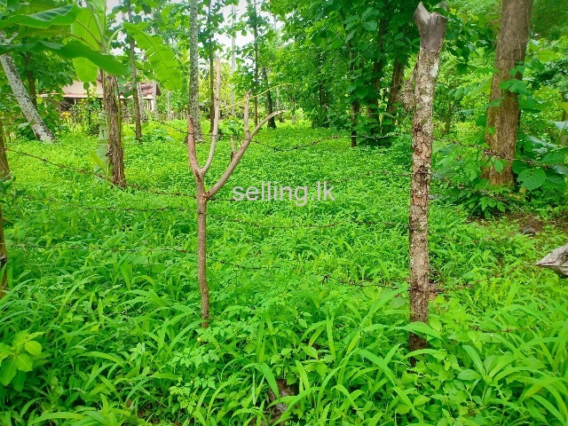 LAND FOR SALE KULIYAPITIYA