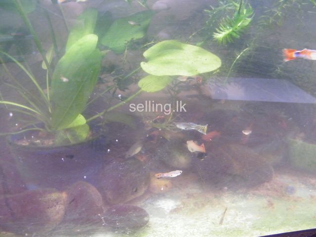 Fish tank for sale with fish