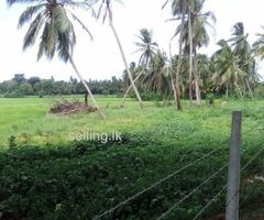 Land in Tissamaharama