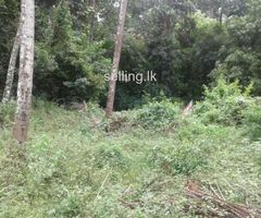 Land sale in Kengalla