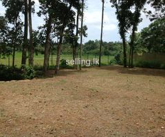 33 P land for sale at Pelawatte