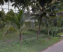 Land for Sale in Beliatta-Dammulla