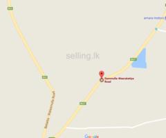 Land for Sale in Beliatta-Dammulla