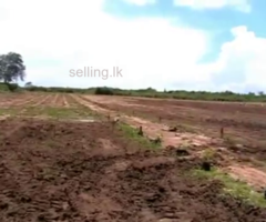 Lands for sale in Mattala (near Airport)