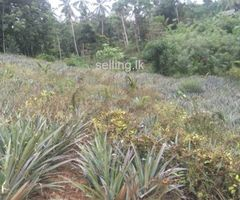 Land For Sale Hanwella ( Kaluaggala )