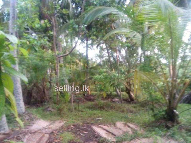 128 Perch land for sale in Unawatuna - Galle