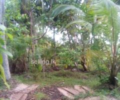 128 Perch land for sale in Unawatuna - Galle