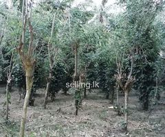 Land for sale balangoda