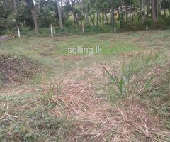 Land for sale in Ibbagamuwa madagalla Road
