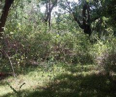 සීගිරි පව්වට 2km ක දුරින් අක්කර 2ක - A Land of 2 acres from Sigiriya