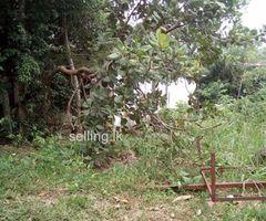 Horana pokunuwita ranpokuna village
