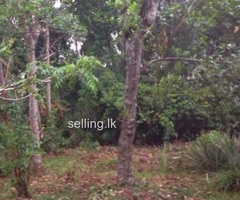 82 perches land for sale in Malamulla Panadura