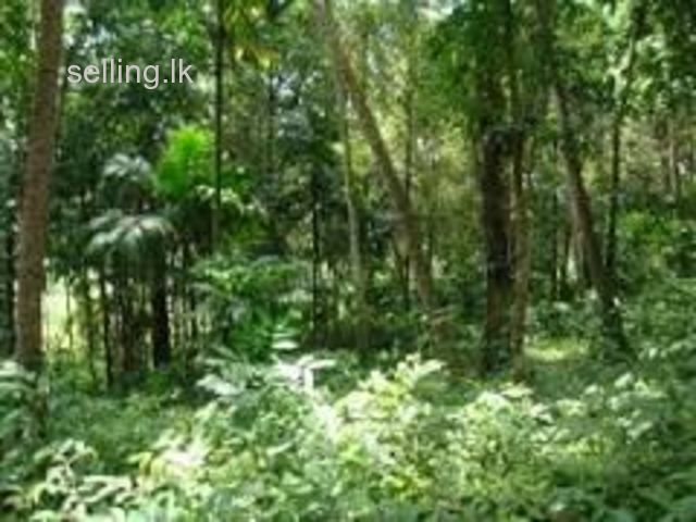 COMMERCIAL LAND IN HORANA