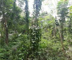 Land for sale - ideal for house/guest house