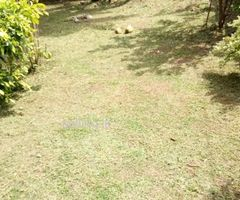 land 45 perches with 2 old houses in Panadura Town