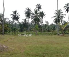 15 Perchs Land for Sale in Gampaha - Divulapitiya - only Rs.75000/-