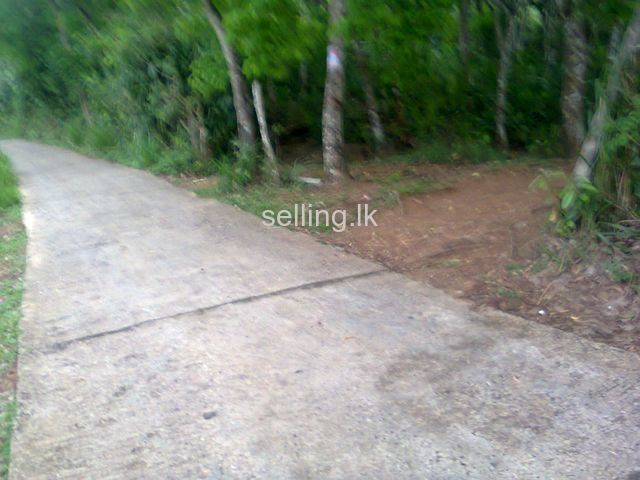 Rubber land for sale in Ratnapura