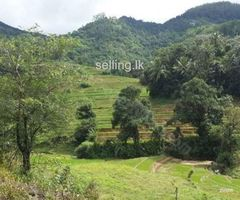 A Land for sale in Kandy Medamahanuwara
