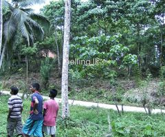 Coconut land for sale in Mapalagama