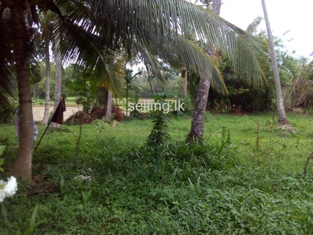 Kurunegala Kudagalgamuwa land for sale