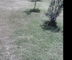 Land For Rent in Ampara