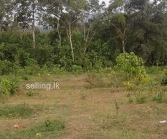 5 Acres land for sale in Kalutara