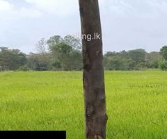 Paddy land for urgent sale in Kandy