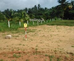 Land for sale in Kurunegala